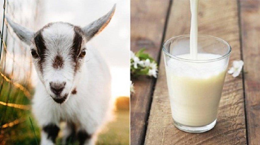 Sữa dưỡng trắng da toàn thân bằng sữa dê