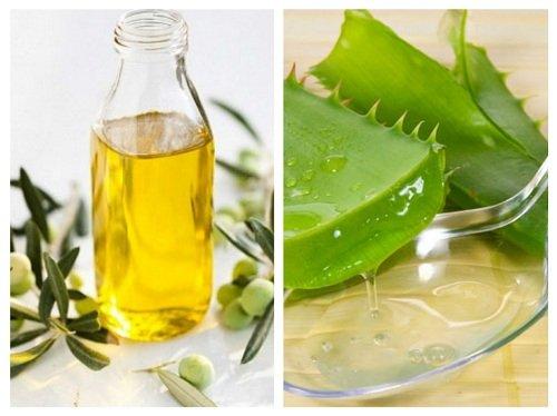 Tóc mềm với lô hội và dầu oliu