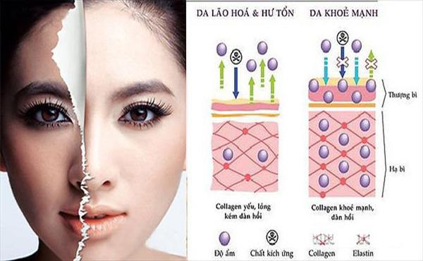tác dụng của collagen đối với da